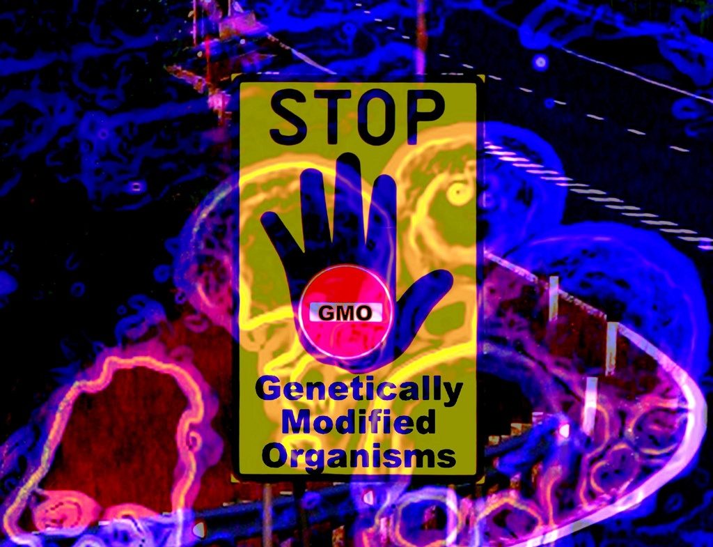 genetically modified food risks