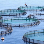 Dangers of Fish Farms