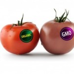 How to Identify GMO Frankenfoods