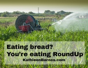 eating roundup