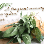 Sage: A fragrant memory and immune system booster